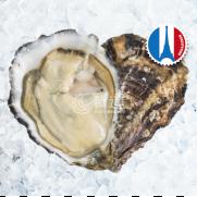 法國 White Pearl 白珍珠蠔  No.2  <<6隻入>>