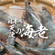 日本天使蝦 (約31-40隻入 1kg)